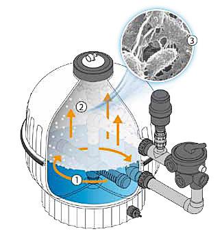 https://www.piscines-hydrosud.be/medias_produits/imgs/fonctionnement-du-filtre-biologique.jpg